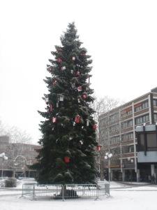 Weihnachtsbaum auf dem Rathausplatz