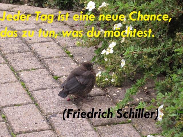 spruch-der-woche-chance-06-10-2016